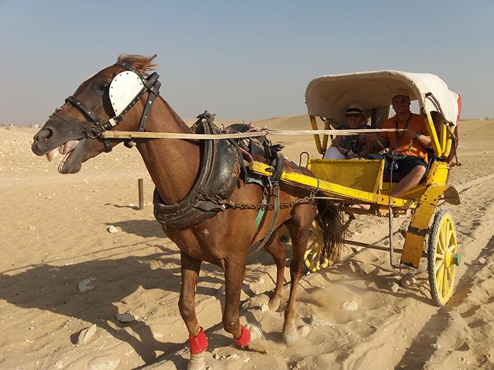 Horse in Egypt