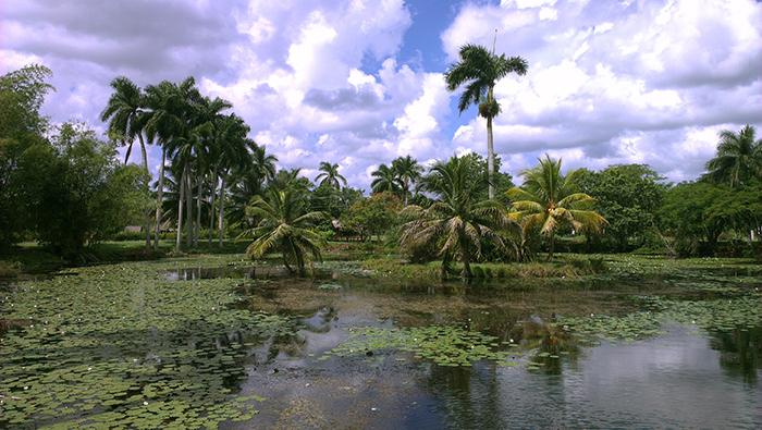 Crocodile farm Cuba 5