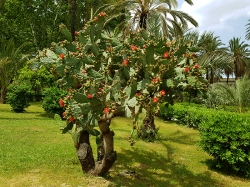 Palermo garden1