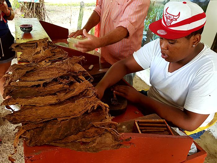 cigars DR