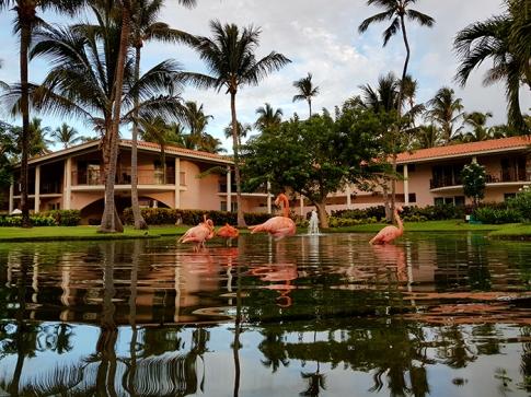 Група фламинго в едно от езерцата в двора на хотела