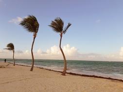 Тези две палми са визитката на хотел Blau Natura Park Eco Resort & Spa