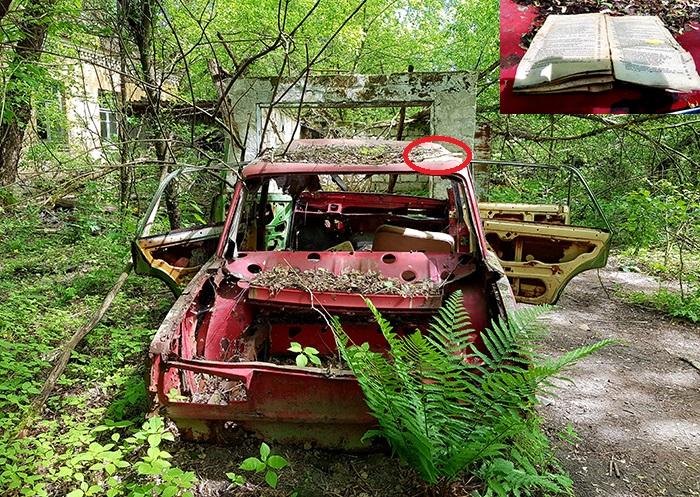 Zalisia an old car